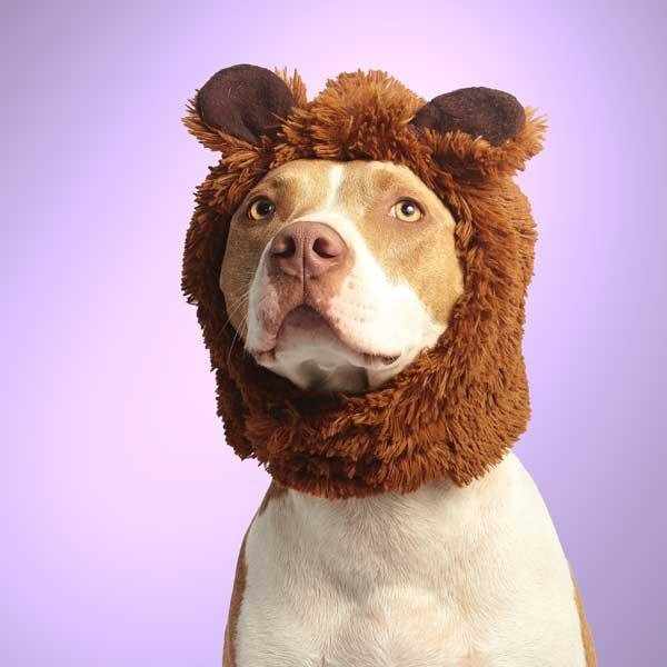 bear-dog